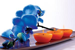 Orchidée et Bien Etre